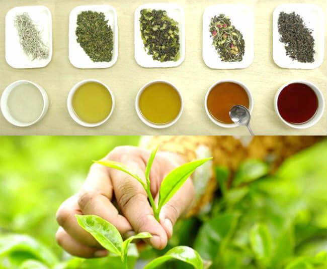 चाय पीने chay ke fayde or nuksan tea benefits side effects