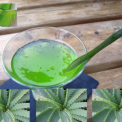 एलोवेरा जूस aloe vera juice benefits and recipe