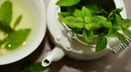 Mint pudina ke fayde in hindi पुदीने के लाभ और पुदीना के बारे में जानना है तो पढ़ें यह पोस्ट