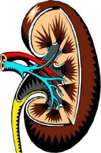 5.डायबिटीज के साइड इफेक्ट्स Diabetes side effects Complications hindi -kidney