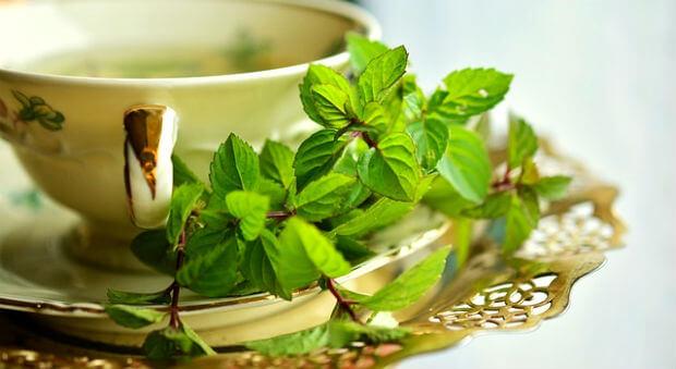 ग्रीन टी पीने के फायदे तथा सावधानियां और बनाने की विधि Green tea ke fayde nuksaan kaise piye bnana