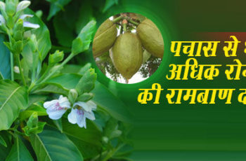 अडूसा के फल पत्तो के औषधीय गुण तथा फायदे adusa ke aushadhiya gun fayde
