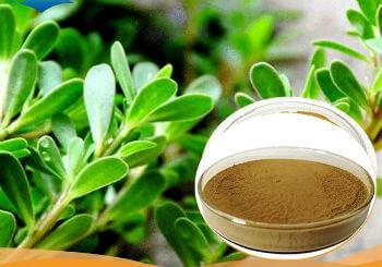 urine peshab ruk ruk kar aana ilaj पेशाब रुक रुक कर आने की बीमारी का इलाज : मूत्रवर्धक फल और सब्जियां