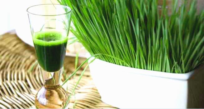 गेहूं के जवारे का रस बनाने की विधि तथा घर पर व्हीटग्रास उगाने के तरीके गेहूं के जवारे रस बनाने Wheatgrass health benefits