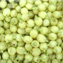 mahua ke phool ke fayde महुआ के फूल के फायदे तथा बेहतरीन औषधीय गुण